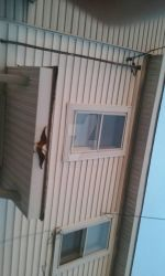 An Eagle on an awning. by Unawaregts666