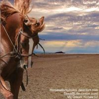 Horse by Carillie