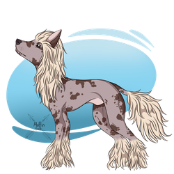 Chinese Crested by EmotionalMuffin