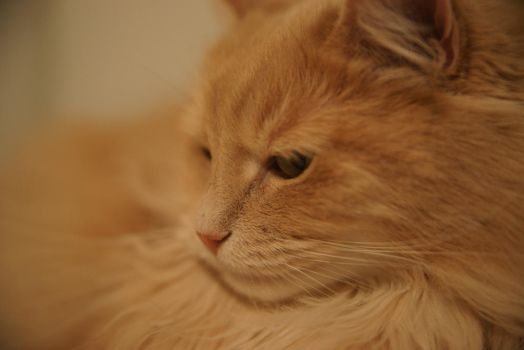 Vitali close up by lilangie19