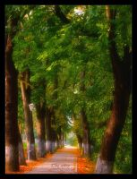 The alley by AlexandruGatea