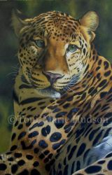 Awakened - Leopard portrait by Canis-Lupess
