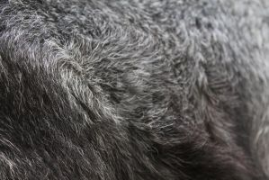 Goat stock 6 - Fur by inapatricia