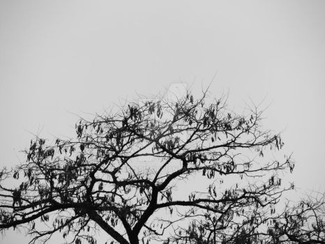 Twigs in the sky by Deeledit