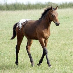 Foal Stock 03 by candigal
