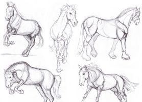 Equine Studies by drillface