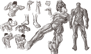 Male anatomy practice by Frost7
