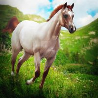 red run HEE Premade by VIP-EquineArt