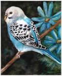 Budgie by Paintwick