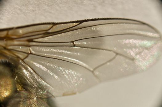 A fly...up close 13 by Egg-Salad