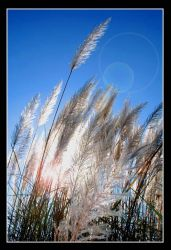 blowing wind by chinlop