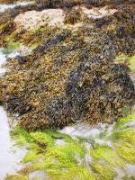 Seaweed by tinuvielluthien