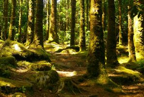 Carpeted Forest by wafitz