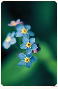 Forget me not - 9 by anjali