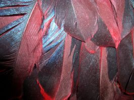 Feathers--flash by TextureTheif