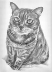 Cat Commission by Karentownsend