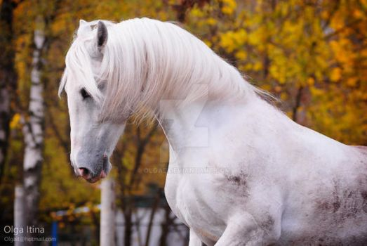 'clear' horse by Olga5