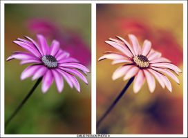 Diptyque by Emilie25