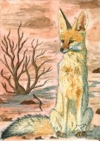 Cape Fox ACEO ComradeK by Woodswallow
