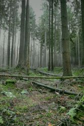 Forest Stock 6 by Sed-rah-Stock