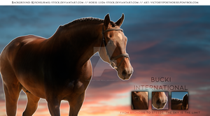 Bucki 3/4 by Horses-Are-Real