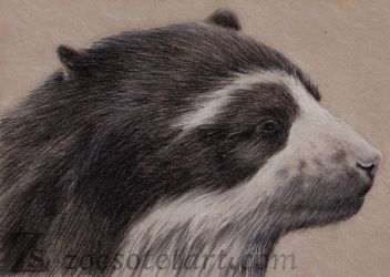 Spectacled Bear 3 by ZoeSotet