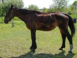 Aged Warmblood Mare - Read Note for Info about her by LuDa-Stock