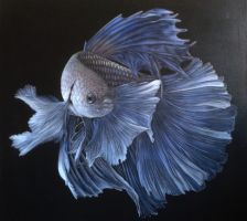 Siamese Fighter, Betta fish. Acrylic on canvas by Rick-Lilley