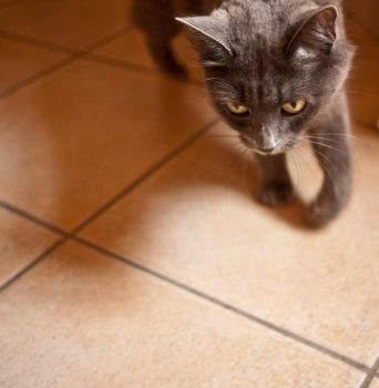 Hungry cat by Dimethil