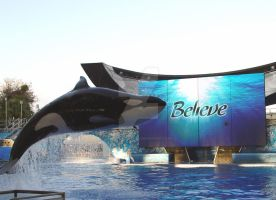 Believe in orca whales by shutterbabe2006