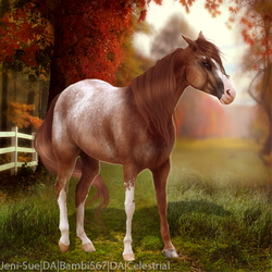 Appy/Red by HorsesAreMyLife09