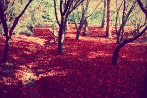 Red autumn leaves by CathleenTarawhiti