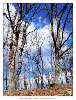 Leafless Trees by Pericles