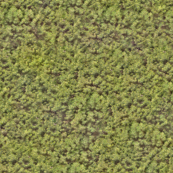 Seamless tiling hedge texture (2048x2048) by lendrick