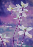 Autumn's Gone, Here's Spring by its-saiby