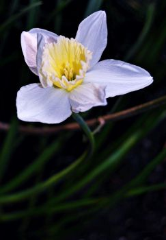 Narciso. by BexRainbow
