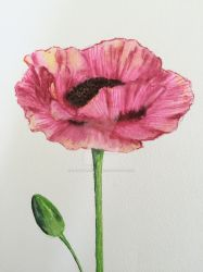 Pink Poppy Ink Drawing by ElegantlyEccentric