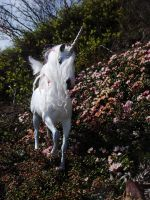 _New Dapple Gray Stallion_ by Ethereal-Beings