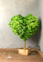 Tree in shape of heart by maciejfrolow