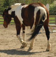 Welly by stockhorse