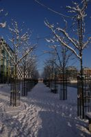 Grand Canal Snow 3 by Margotka