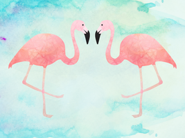 Flamingos by apparate
