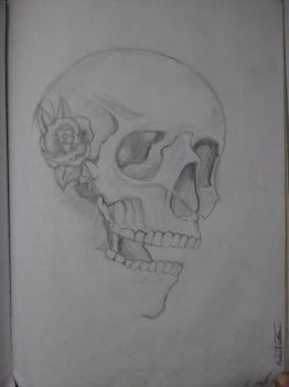 Skull by swahiligiant
