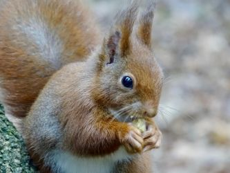 Only you by Squirrels2poet2queen