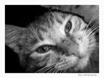 B and W kitty by romaneza