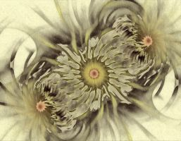 Faded Sunflowers by eReSaW