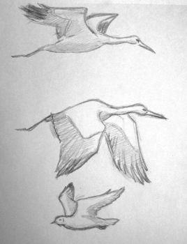 Study of flying birds: stork and sea-gull by KanaGo
