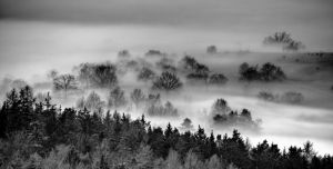 morning fog by stlasidylko