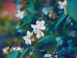 Memories of Spring by FrancescaDelfino