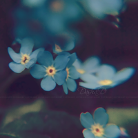 :FORGET-ME-NOT: II by onixa